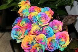 Hand Bouquet Rainbow Toko Bunga Hand Bouquet Di Surabaya Jual